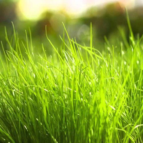 Fertilizantes Edáficos